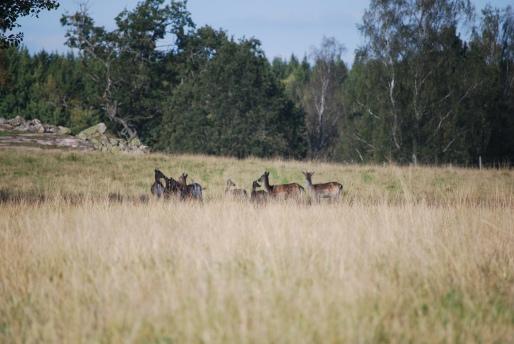 Bo lantligt och upplev vilda djur på nära håll